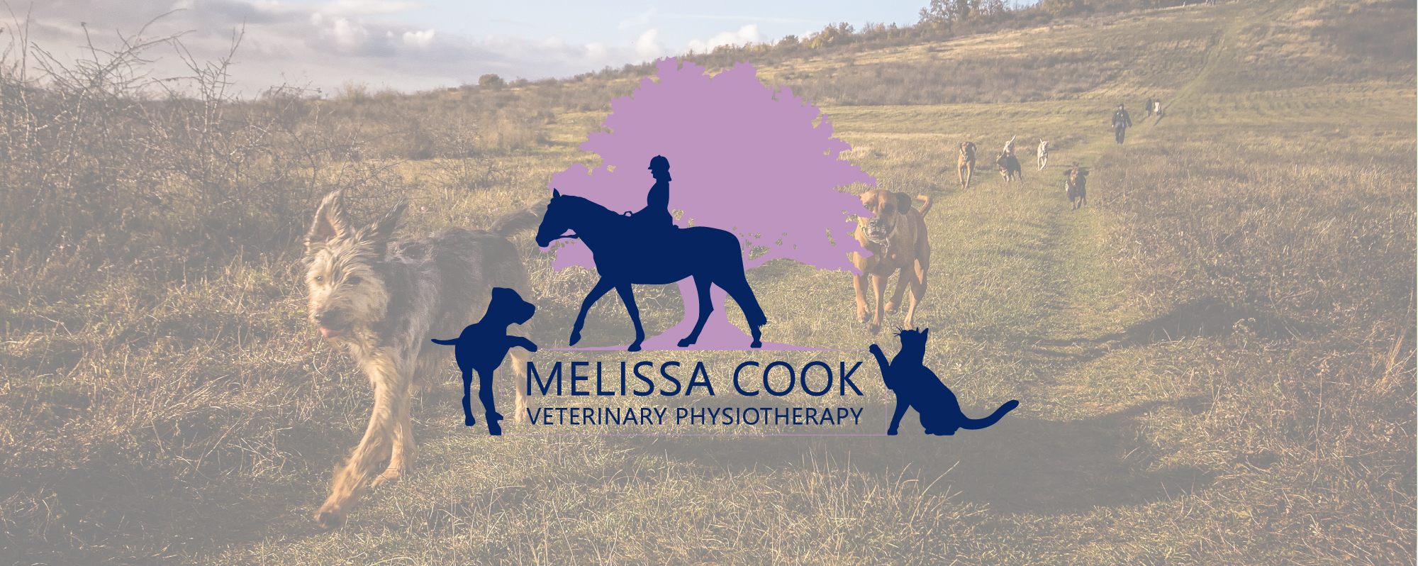 Melissa Cook Veterinary Physiotherapy
